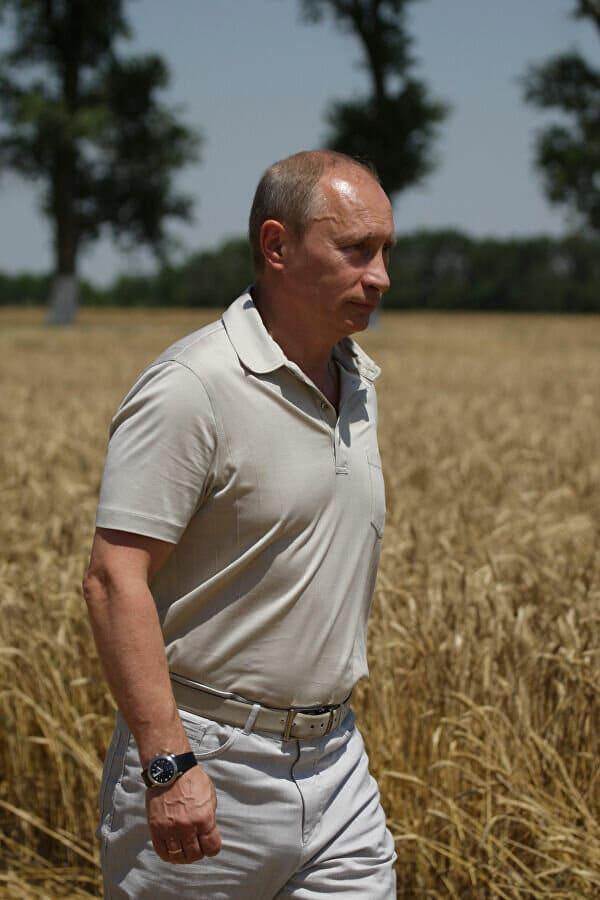 Путин в поле пшеницы
